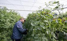 La ampliación de suelo cultivable será una de las prioridades de la Junta en Motril