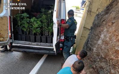 Tres individuos son soprendidos transportando 463 plantas de marihuana en una furgoneta en Dúrcal