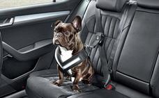 Si viajas con tu perro, así es como debe ir en el coche