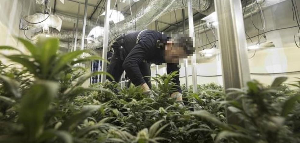 Los intentos de asesinato y agresiones crecen en Granada por el cultivo de marihuana