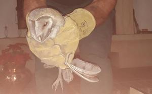 Rescatan una lechuza que se había quedado atrapada en la chimenea de una vivienda de Fuente Vaqueros