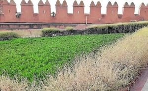 Más de una semana sin agua en la Alcazaba