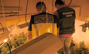 Otro detenido en Jaén tras desmantelar una plantación casera de 'maría' con 363 plantas