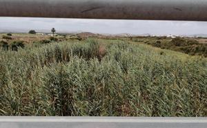 Preocupación del PSOE por la «dejadez» de la Junta en la limpieza de ramblas ante las lluvias
