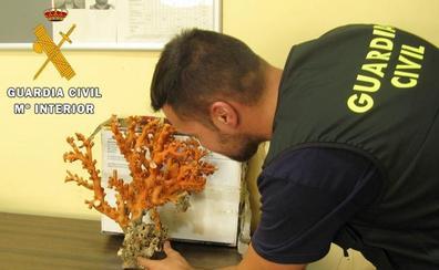 Requisan dos kilos de coral rojo en el puerto de Almería