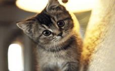 Cuatro objetos con los que conquistar a tu gato para siempre