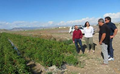Cien kilómetros de caminos rurales dañados en Huéscar y 20.000 pollos muertos en Benamaurel