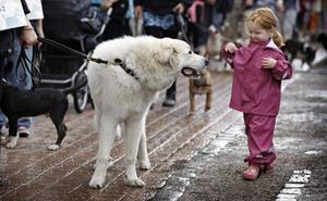 Un colegio de Granada estrena una asignatura de protección animal