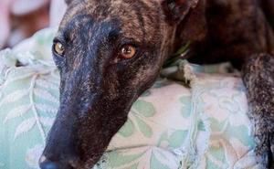 Siete investigados en Granada por supuesto maltrato a animales