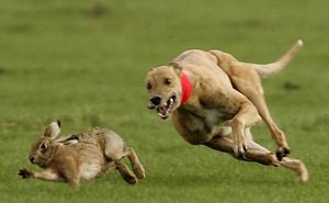 Un cazador denuncia al dueño del perro que mató a un conejo en la feria de caza Ibercaza