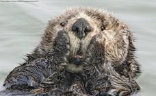 Las 40 divertidas fotos de animales 'pillados' en el mejor momento que optan al Premio Comedy Wildlife
