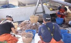 La pesca de quisquillas se somete a examen