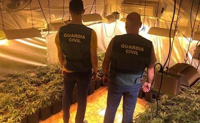 Tres detenidos al desmantelar tres plantaciones de marihuana en viviendas de Marmolejo