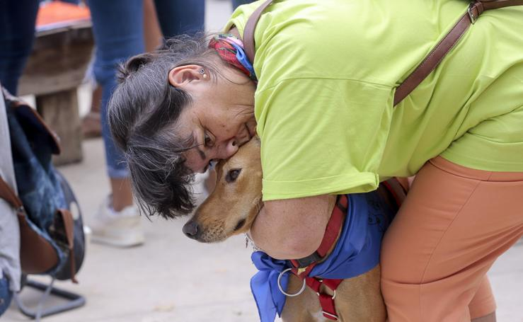 Las mejores imágenes de la exitosa II Feria de Adopción de Mascotas de Granada