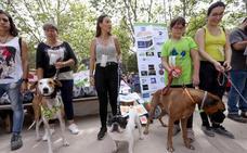 Veinte asociaciones llenan la segunda Feria de Adopción de Mascotas