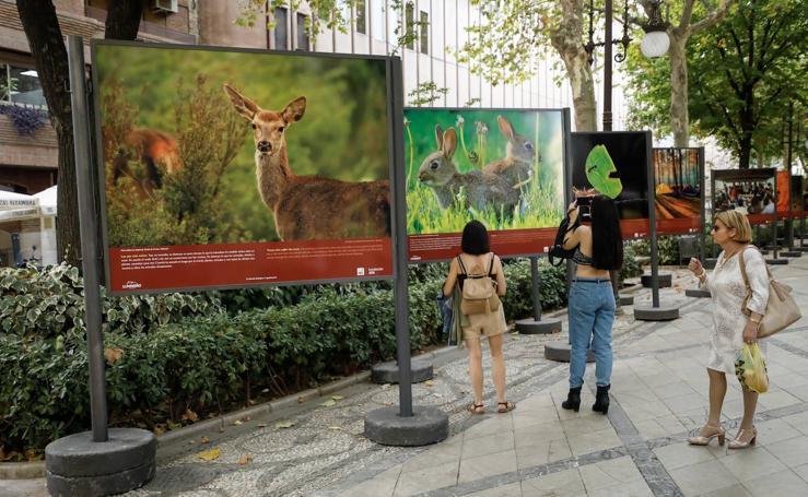 'Salvemos los bosques', fotografía para concienciar
