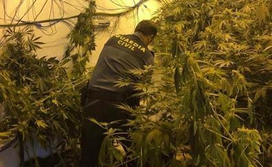Vigilaban su plantación de marihuana en Pinos Puente con una escopeta y huyeron al ser sorprendidos por la Guardia Civil