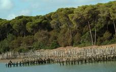 Doñana ha cerrado más de 400 pozos de agua desde 2018 para recuperar su acuífero