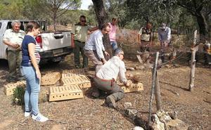 Suelta de perdices para mejorar la biodiversidad del Parque de Despeñaperros
