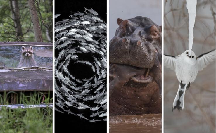 Las mejores fotografías de naturaleza salvaje del 2019