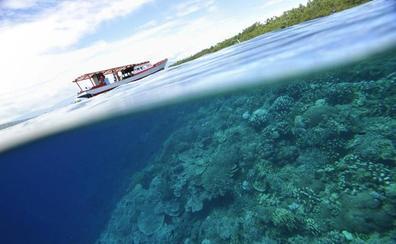 Un coral de Polinesia, clave en la resistencia a los efectos de la crisis climática
