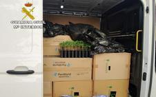 Llevaban 2.747 plantones de marihuana en la fugoneta y los descubrieron al esquivar a la Guardia Civil
