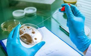 Investigadores españoles abren la puerta a una terapia alternativa a los antibióticos contra las bacterias