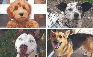 En busca del perro 'Frankenstein': ya van más de 300 razas