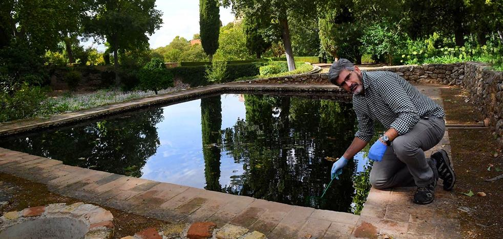 La Alhambra, nuevo hábitat para el sapo partero bético