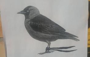 Empapela Granada buscando su pájaro perdido y acaba encontrándolo