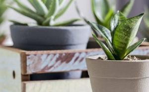 4 plantas muy resistentes para decorar tu hogar con pocos cuidados