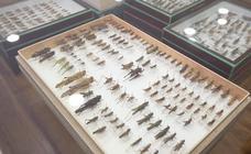 Una muestra de insectos 'se cuela' en la UGR