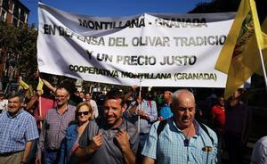 Más de 1.500 granadinos se suman a la gran marcha de Madrid para clamar por la defensa del olivar
