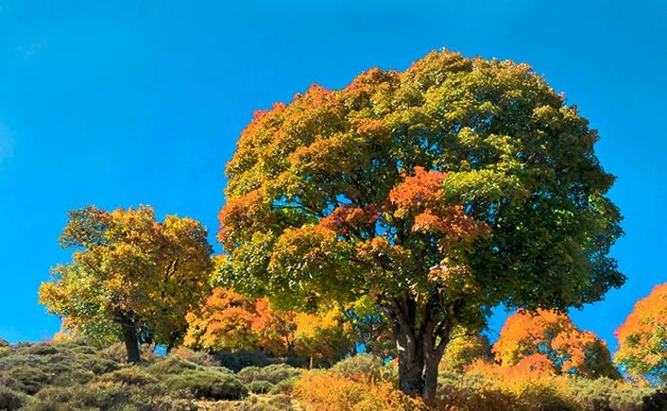 Rincones de la provincia para practicar senderismo en otoño