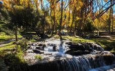 Castañar de Jérez del Marquesado: una ruta por los colores del otoño
