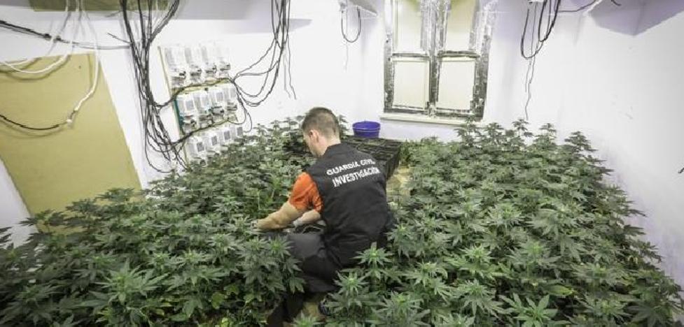 Un edificio de tres pisos en Santa Fe con 850 plantas de marihuana ocupándolo todo