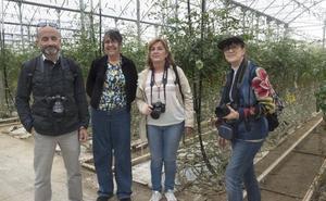 Un recorrido por la horticultura bajo abrigo de Almería a través de la imagen