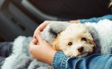 5 consejos para que tu perro no pase frío este invierno