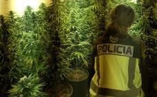 Incautadas 124 plantas de marihuana y dos escopetas en una vivienda de Almería