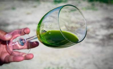 La recogida de los aceites verdes tempranos se normaliza y extiende en la provincia