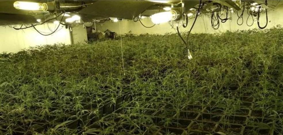 Cuatro homicidios vinculados con la marihuana en Granada en sólo dos años y medio