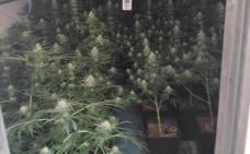 Así es el invernadero de marihuana oculto que ha intervenido la Policía Local de Granada
