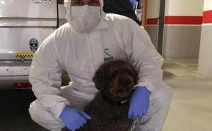 Muere de un infarto Marley, el perro experto de la Guardia Civil que participó en los casos de Diana Quer y el pequeño Gabriel