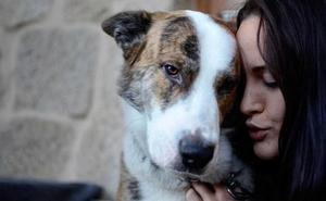 Tener un perro mejora y prolonga la vida de los humanos: la ciencia lo confirma