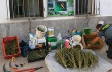 Descubren una plantación de marihuana regada desde el río Genil y oculta en un túnel