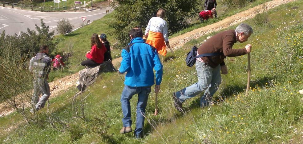 Una 'gran bellotada' para luchar contra el desierto en la provincia de Jaén