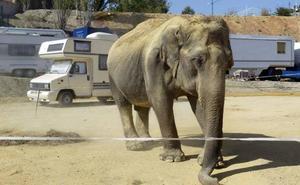 Ecologistas en Acción denuncia el regreso de un circo con animales al Ferial