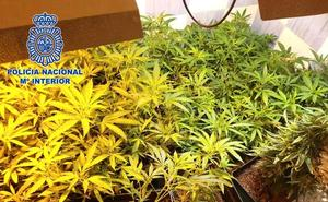 La Policía Nacional interviene 2.844 plantas de marihuana en un operativo policial en el barrio del Puche