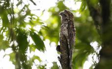 Investigan a un vecino de Jaén por cazar pájaros con artes prohibidas en Puente Tablas