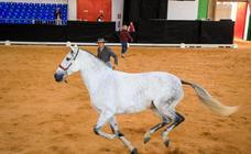 Granada se convierte en la capital mundial del caballo